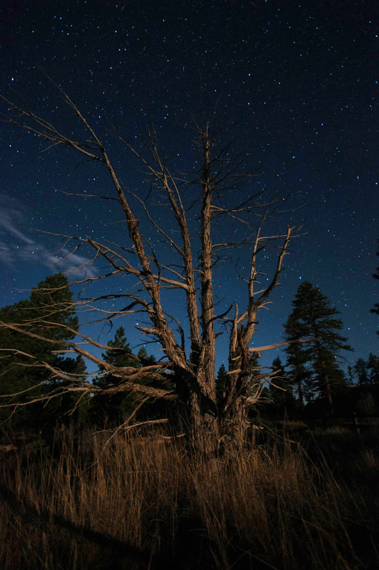 Photograph Night photography in the Bryce Canyon by VisionPhotographer  on 500px
