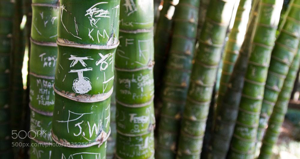 Photograph Palmwritting by Hans Fischer on 500px