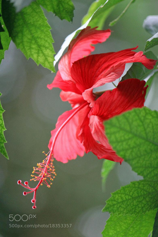 Photograph Flower Power by Nikolai Alex Petersen on 500px