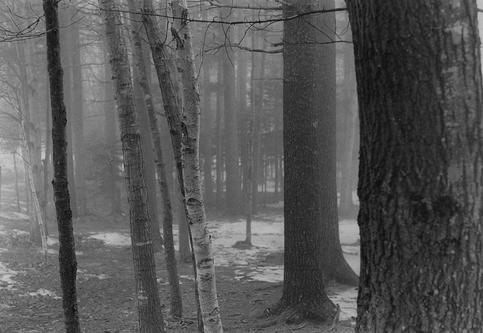 Photograph Mist by Victoria Clemons on 500px