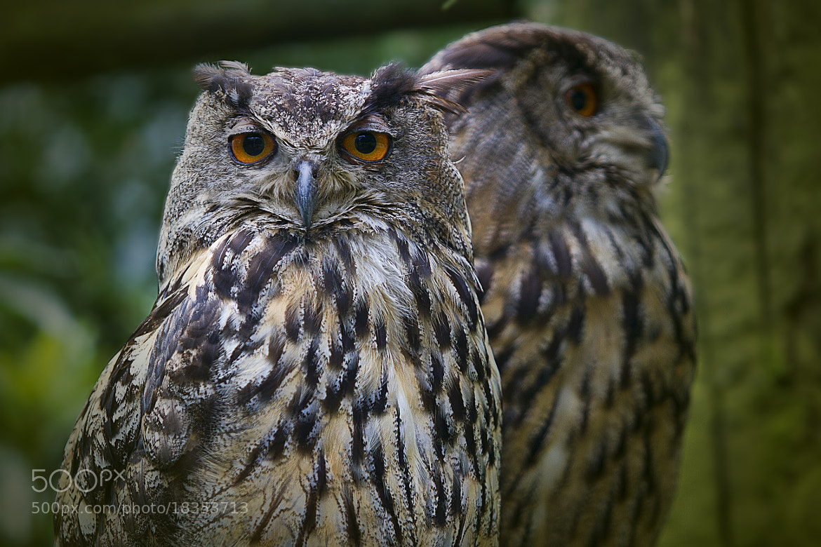 Photograph Two of a Kind by Wim Bolsens on 500px