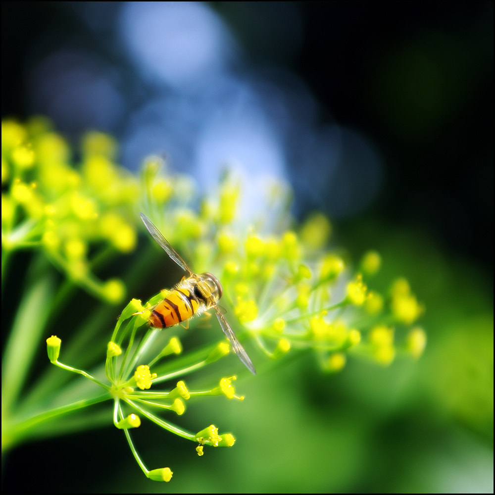 Photograph Little Fly by Vera V on 500px