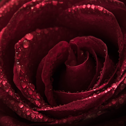Just a red rose, Canon EOS 60D, Canon EF 35-135mm f/4-5.6 USM