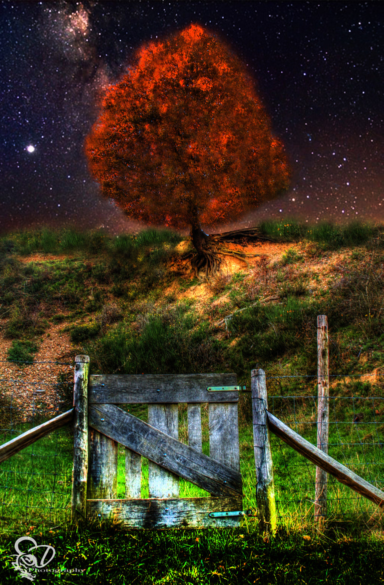 Photograph gate to the autumn tree by Danny schurgers on 500px