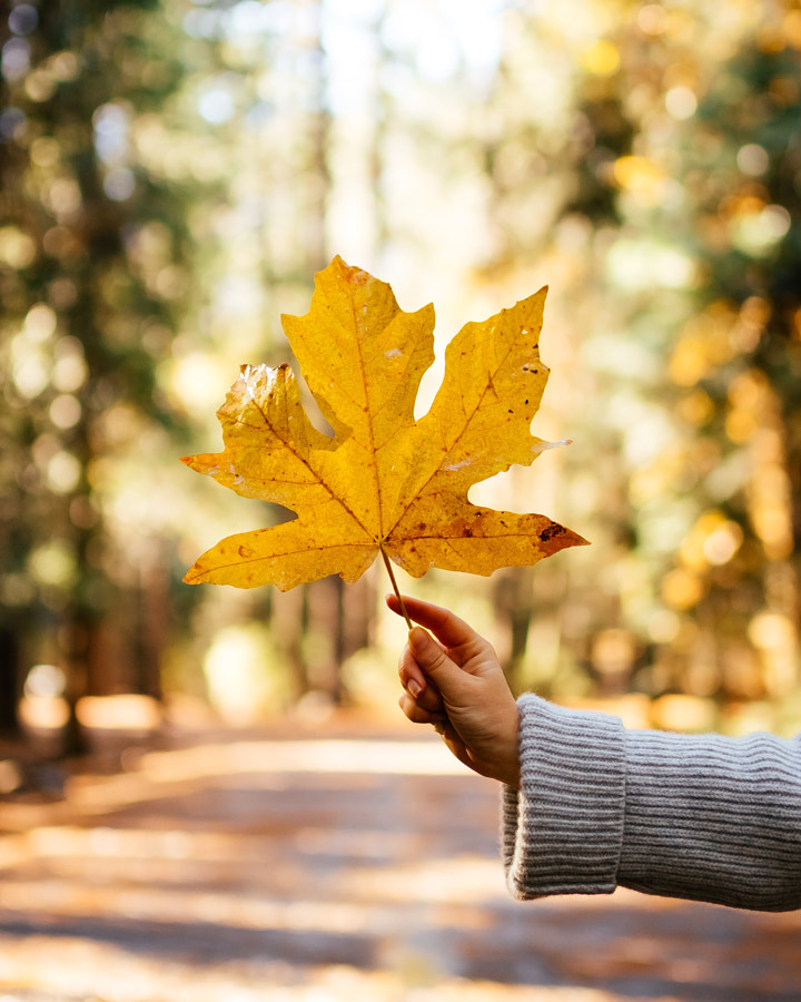 I love that during fall every leaf becomes a flower by Oscar Nilsson on 500px.com