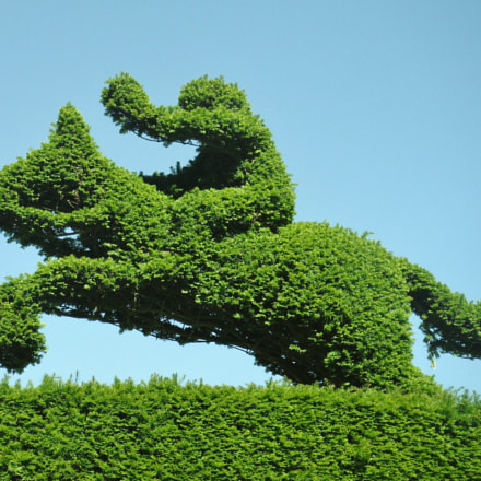 Horse racing topiary, Fujifilm FinePix Z70