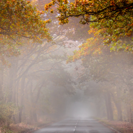 Autumn Road, Canon EOS 7D MARK II, Canon EF 75-300mm f/4-5.6 IS USM