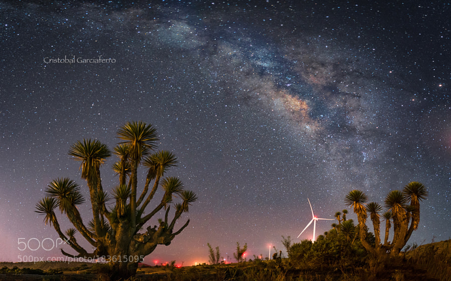 Windfarm cactus and Milky way