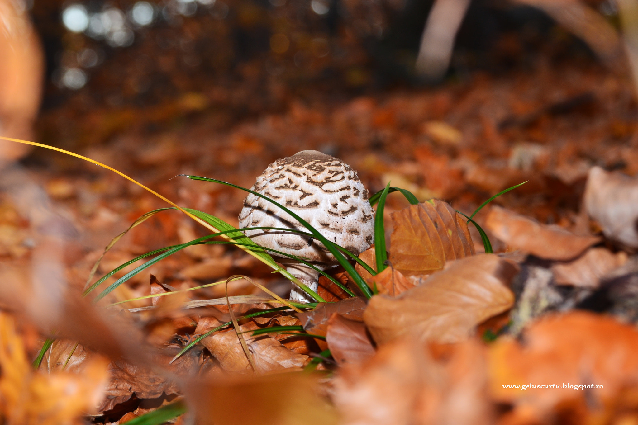 Photograph Autumn mushrooms in the forest by Scurtu Gelu on 500px