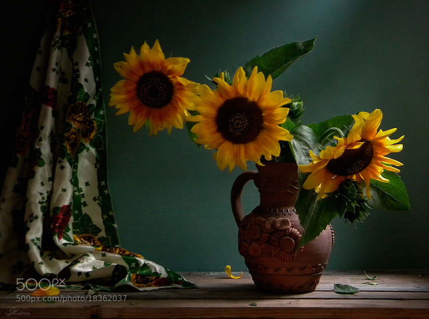 Photograph ***** by Мetron Nataliia Kylyvnyk on 500px