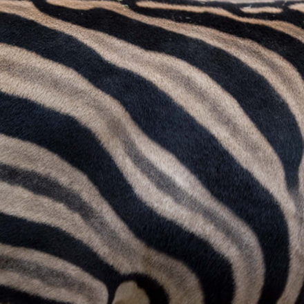 Real zebra pattern, Canon EOS 550D, Tamron SP AF 180mm f/3.5 Di Macro