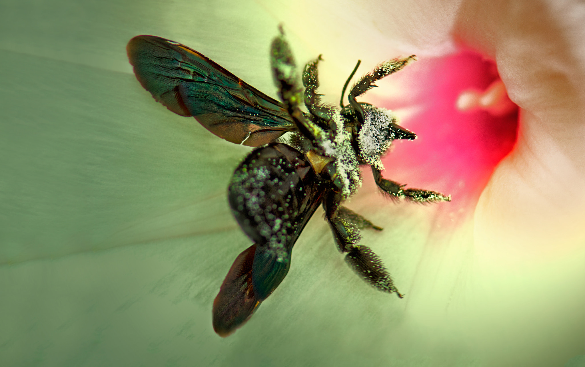 Photograph Pollen Mania by Fahmi Bhs on 500px