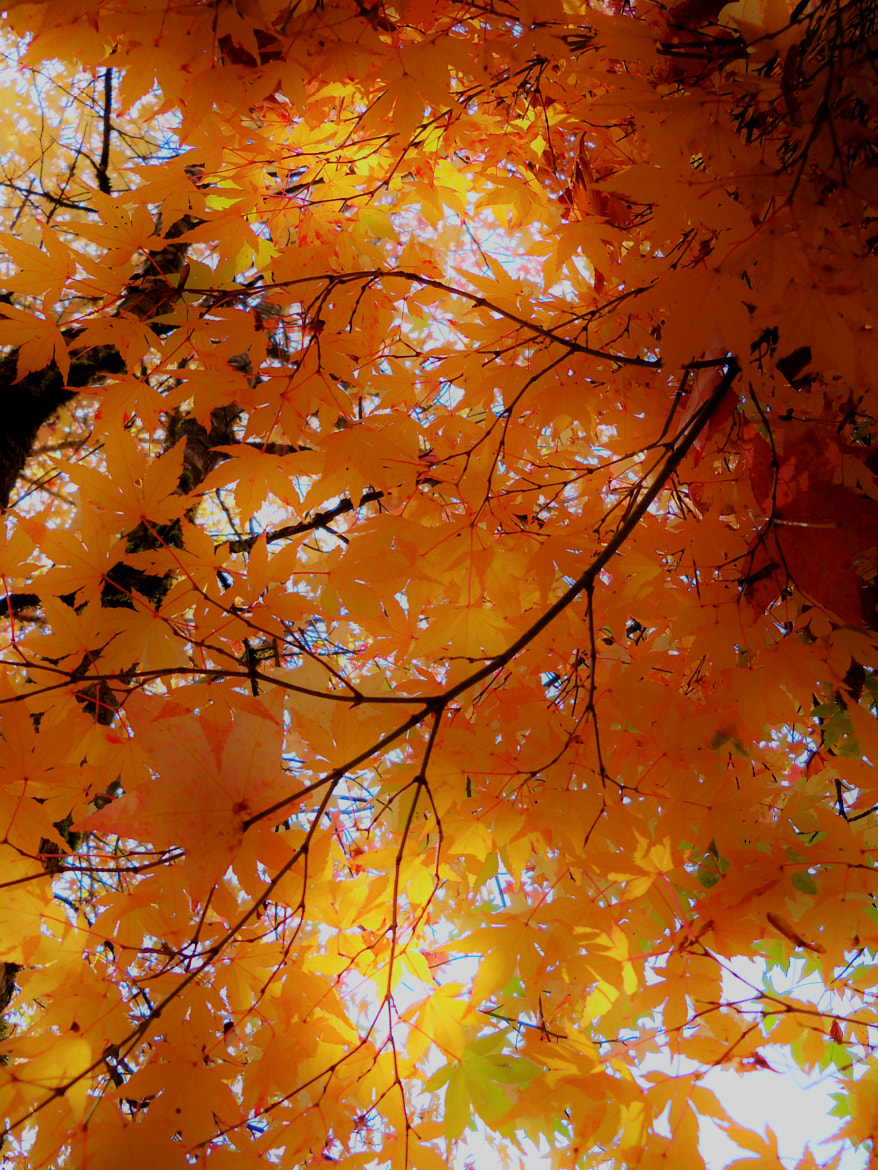 Photograph Autumn's Glow by Nancy Andersen on 500px