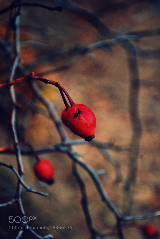 Photograph . by Sylvia Asenova on 500px
