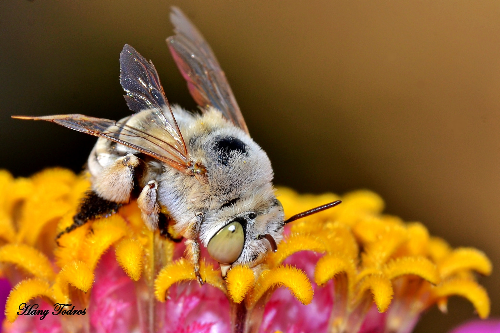 Photograph Bee 2 by Hany Todros on 500px