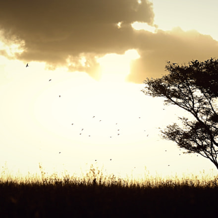 Natures Silhouettes , Canon EOS 700D, Canon EF 100-400mm f/4.5-5.6L IS USM