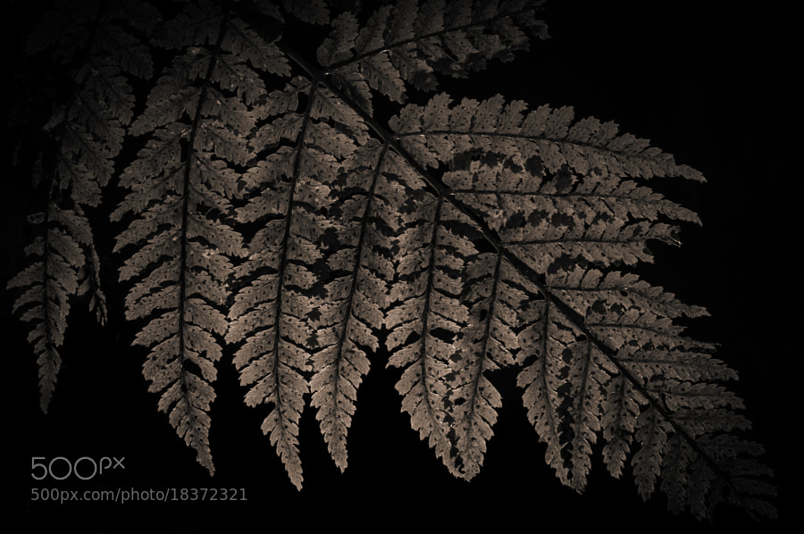 Glowing fern by Matthew Maddock (PhotoMadd)) on 500px.com