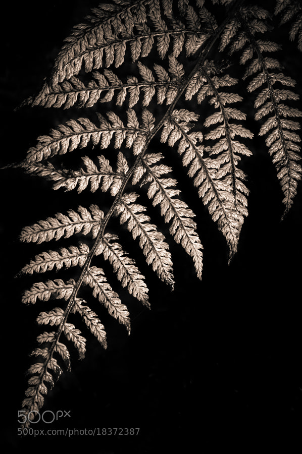 Floodlit fern by Matthew Maddock (PhotoMadd)) on 500px.com