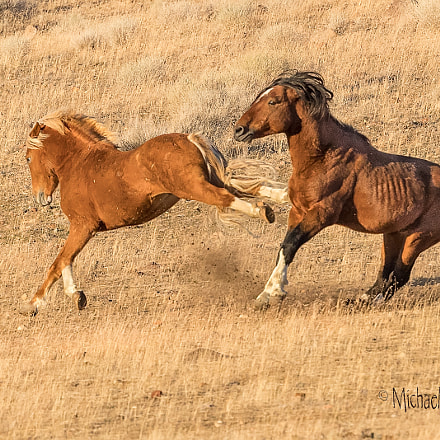 Wild Horse Kick, Canon EOS-1D X MARK II, Canon EF 200-400mm f/4L IS USM