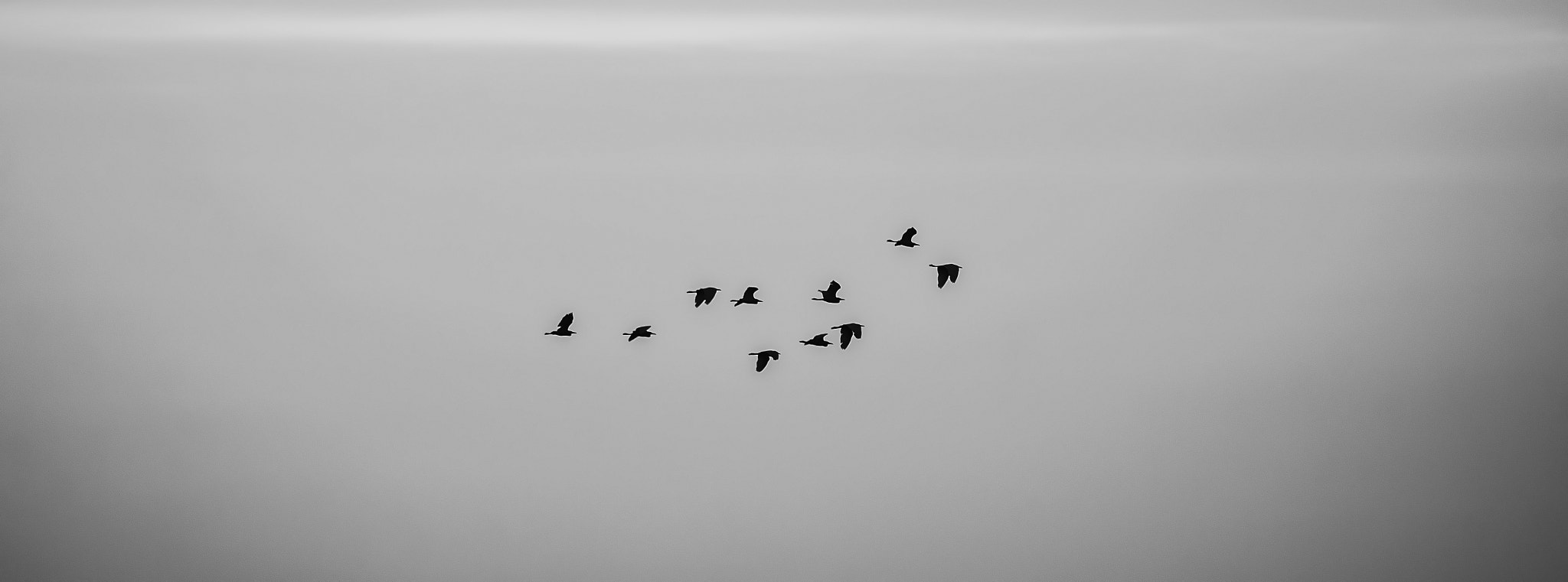 Photograph birds by arpan choudhury on 500px