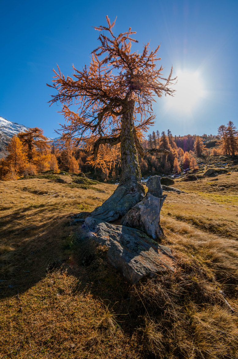 Photograph Lonely tree by VisionPhotographer  on 500px