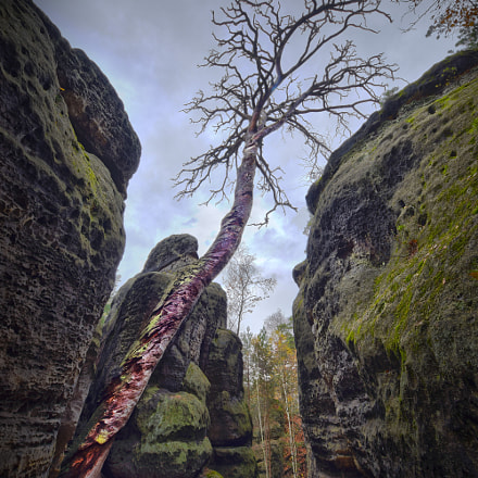 Dead tree in the rocks