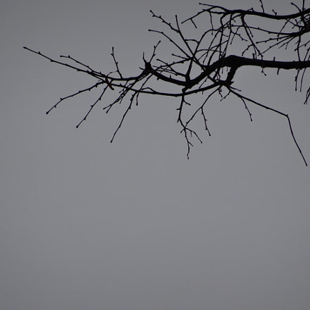 Sky and branches, Sony DSC-HX50