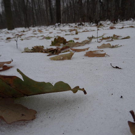 Leaves on the snow, Sony DSC-HX50
