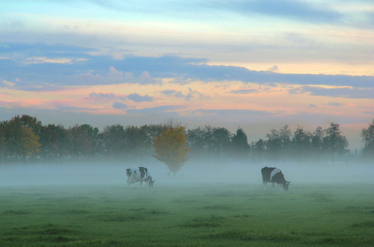 Photograph Typical Dutch landscape by Joost Lagerweij on 500px
