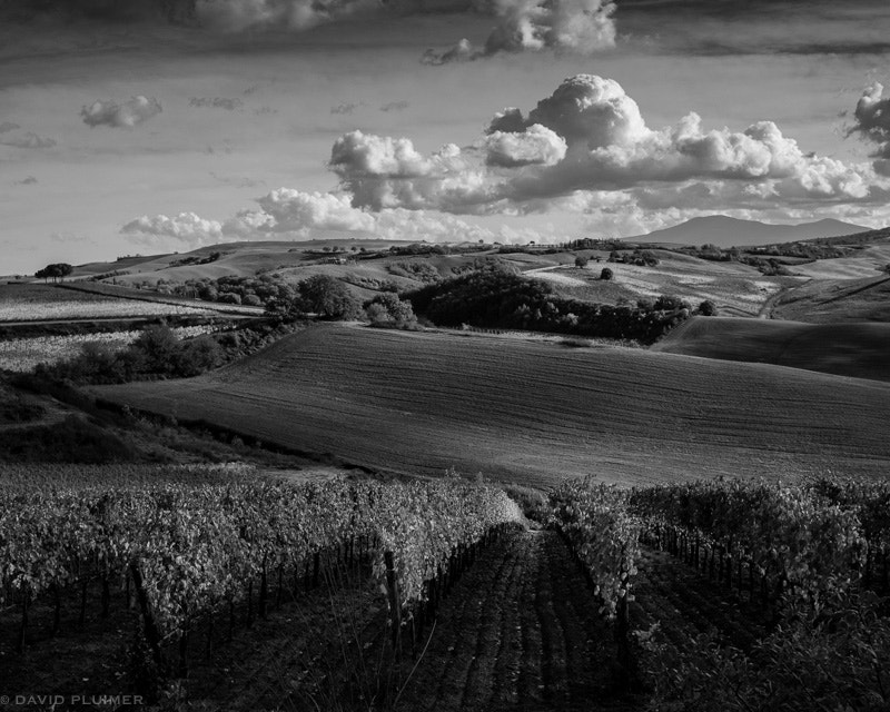 Photograph Montalcino by Dave Pluimer on 500px