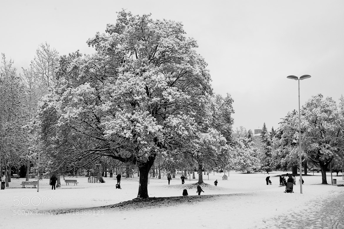 Photograph Snow in the park by Stefano Boschi on 500px