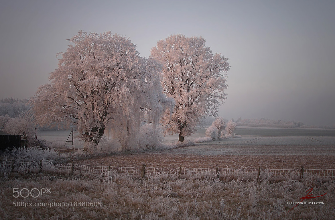 Photograph Rosy Winter Oaks by Lars Korb on 500px