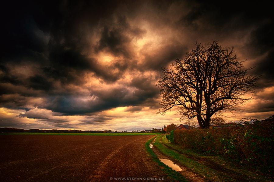 Wet and dark autumn