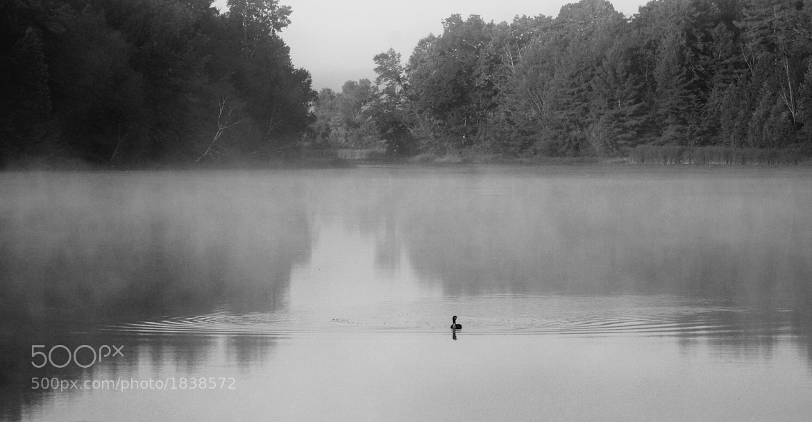 Photograph Misty Mallard by Melanie Levesque on 500px