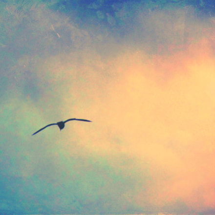 The last seagull before, Canon POWERSHOT SX30 IS