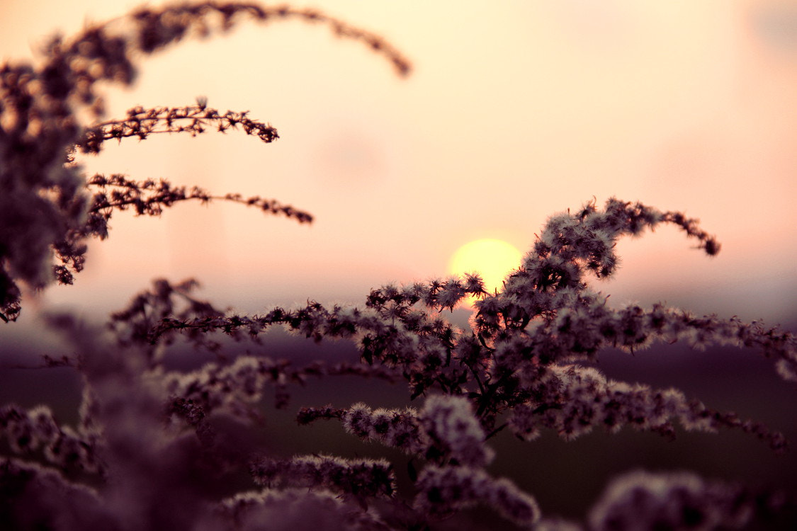 Photograph Sunset Plants by Matthias Zirnig on 500px