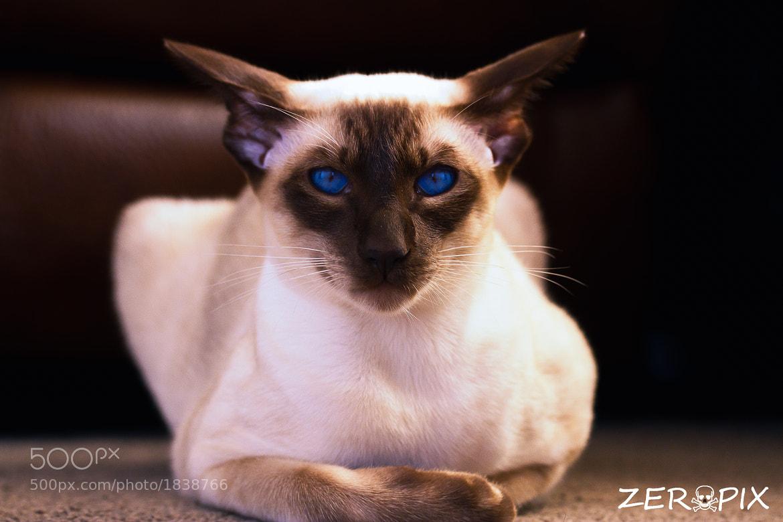 Photograph my blue eyed princess by ZeroPix Photography on 500px
