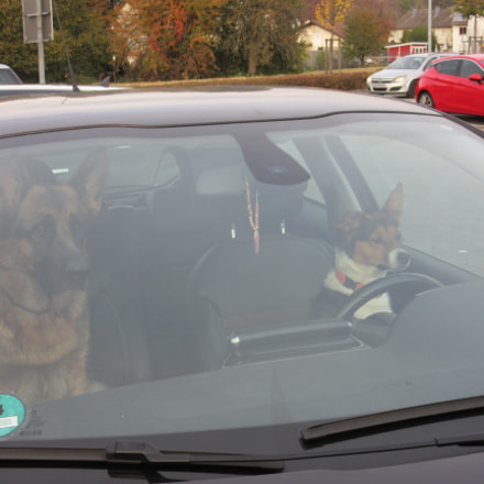 Dogs in a car, Canon POWERSHOT SX600 HS