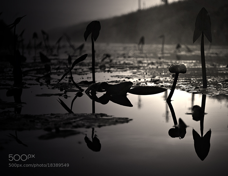 Photograph liles by virginijus baltmiskis on 500px