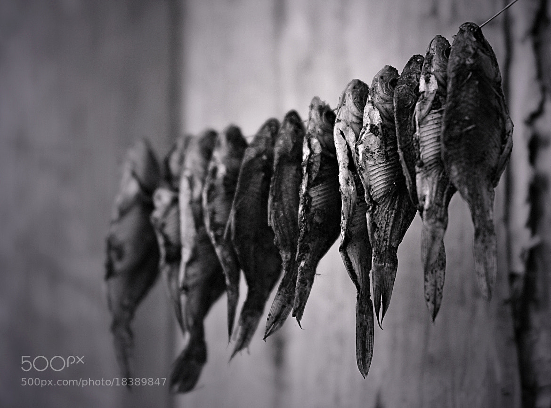 Photograph sile by virginijus baltmiskis on 500px