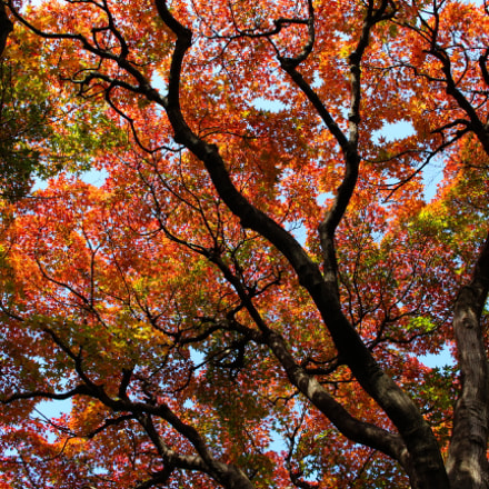 Autumn colors, Canon EOS KISS X7I, Canon EF-S 18-55mm f/3.5-5.6 IS STM