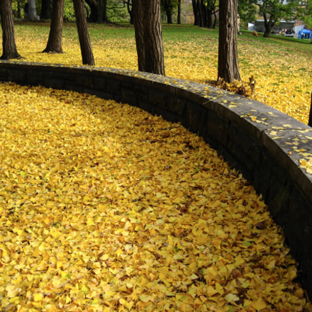 Carpet of Fall Leaves, Canon POWERSHOT SD600