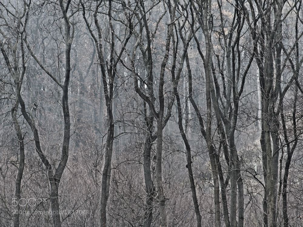 Photograph forest in november by Manfred Huszar on 500px
