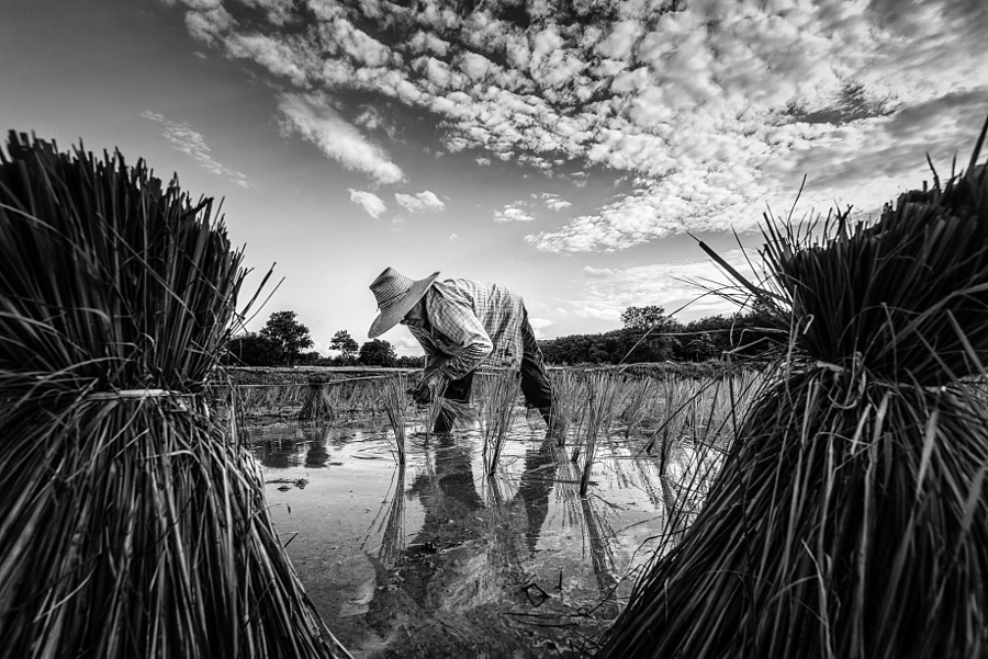 black and white Thai farmers by Thanaboon Koklang on 500px.com