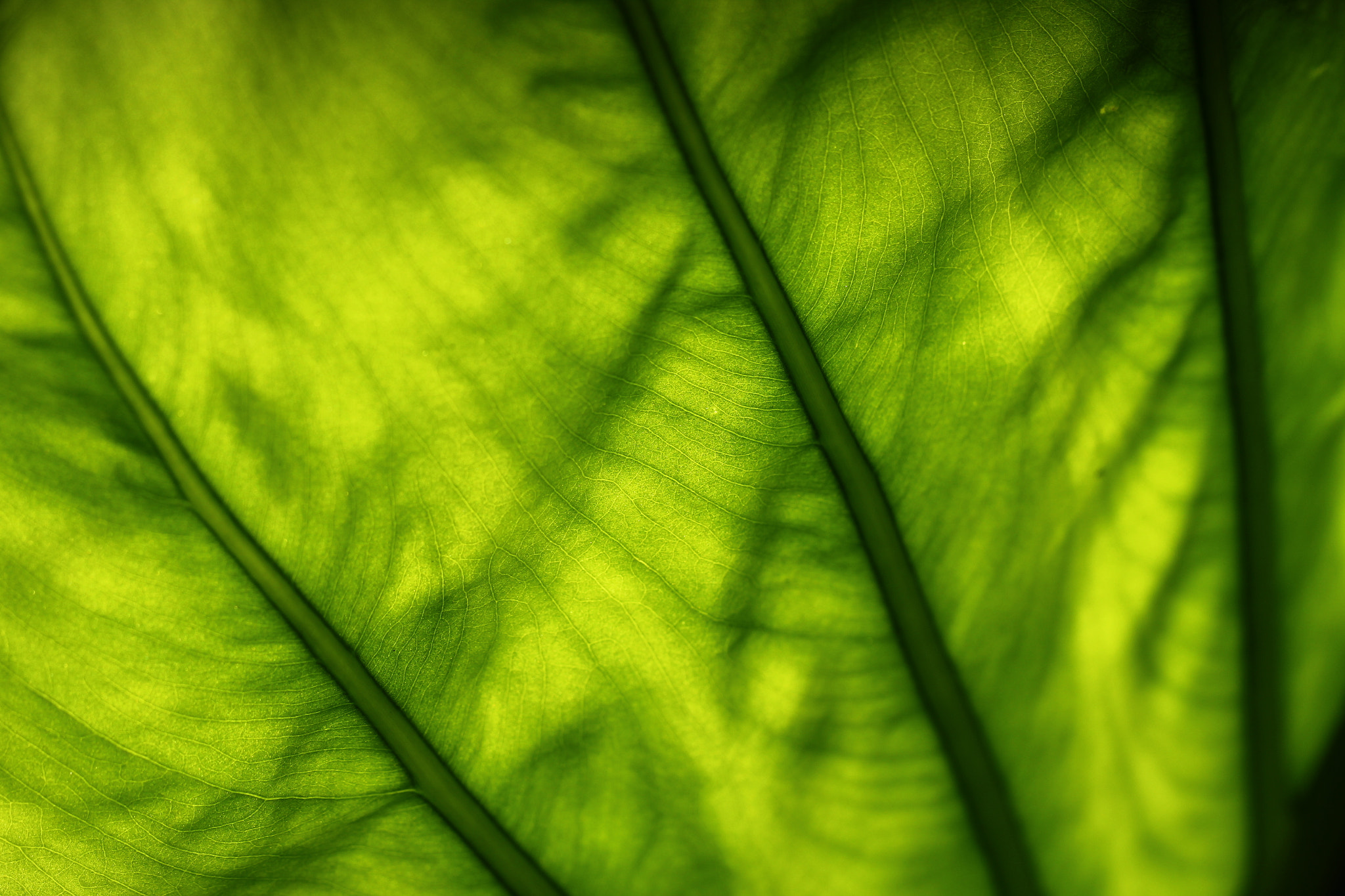 Photograph the green leaf by Tom  H. on 500px