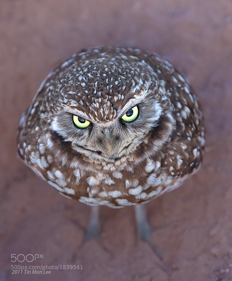 Photograph Angry Bird by Tin Man on 500px