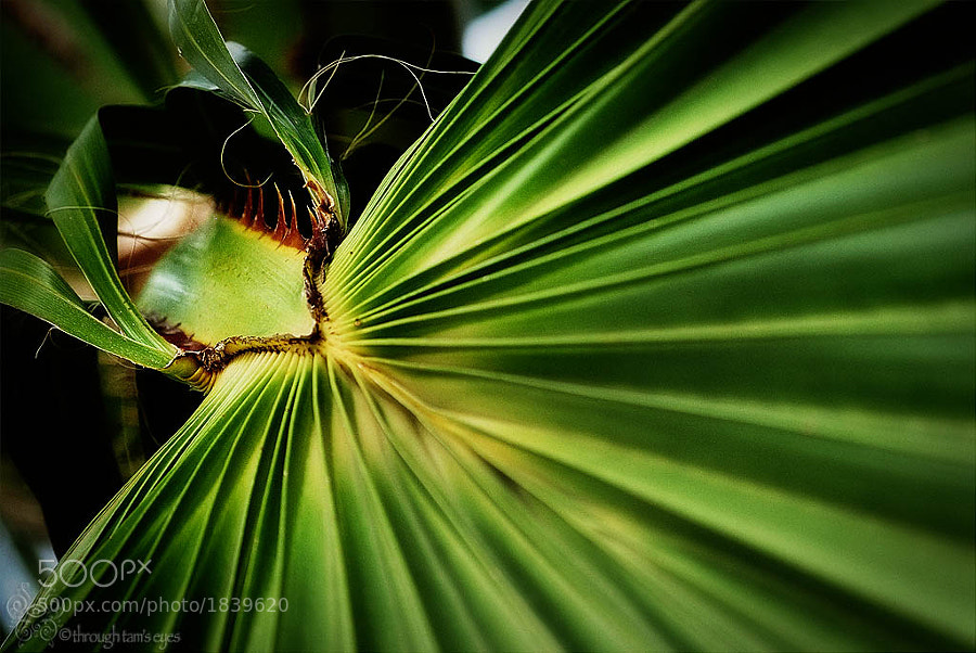 I love palm fronds!  They have such great lines and interesting colors.