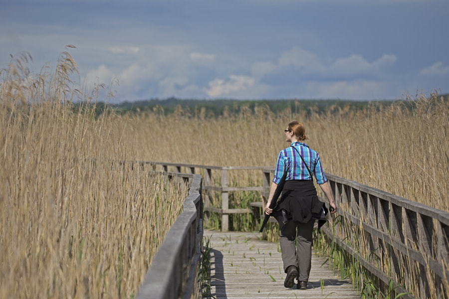 A walk through the reed