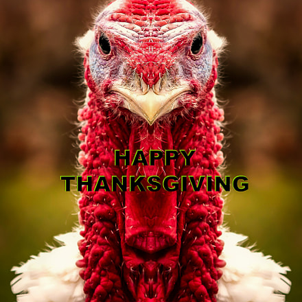 Happy Thanksgiving, Nikon D300S, Sigma 70-300mm F4-5.6 APO DG Macro HSM