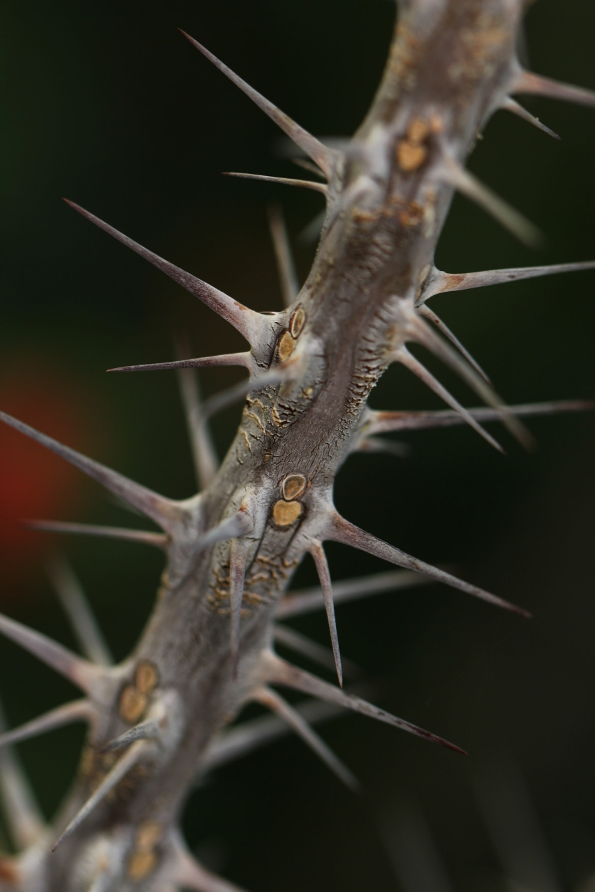 Photograph sharp thorns by Tom  H. on 500px